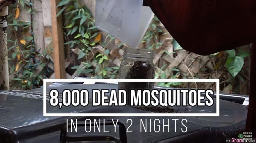 美国男利用风扇和狗1晚灭4000蚊子,网友好奇数蚊子数到天亮还数不完,原来可以这样计算蚊子的数量