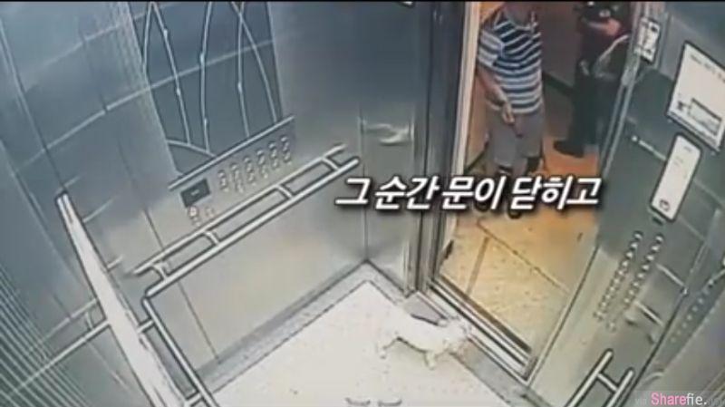 狗狗先跑进主人还没进电梯门就关上,眼看狗狗脖子就要被拉断,警方这个动作救了牠一命