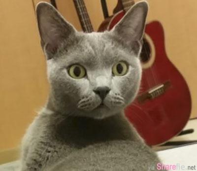 这只猫咪动了「除蛋」手术,当它发现蛋蛋消失了,整个表情超震惊