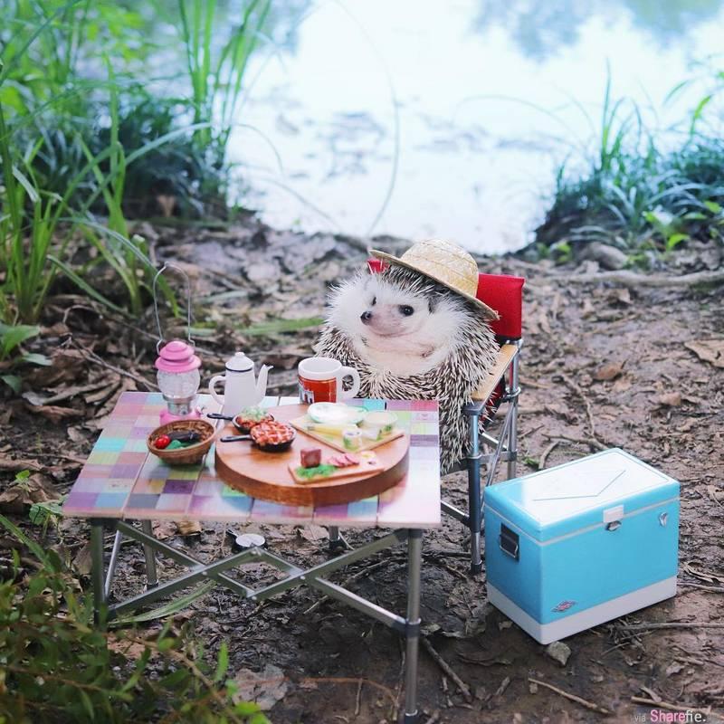 史上最萌小吃货azuki去露营,与迷你装备合照萌翻网友