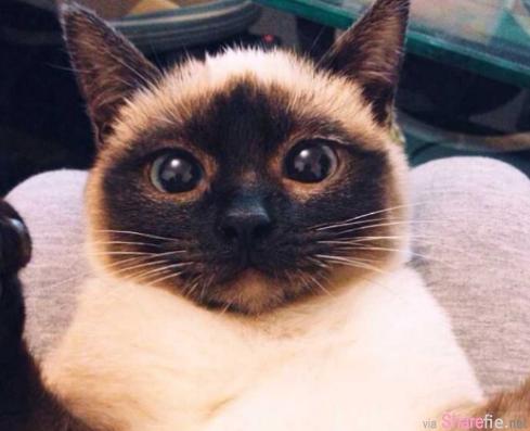 这只猫咪越养越黑,听完医生的话主人回家立刻做这件事:开空调