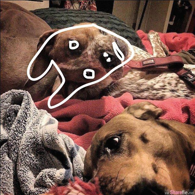 诡异狗狗照网络爆红,原来大家都看错了