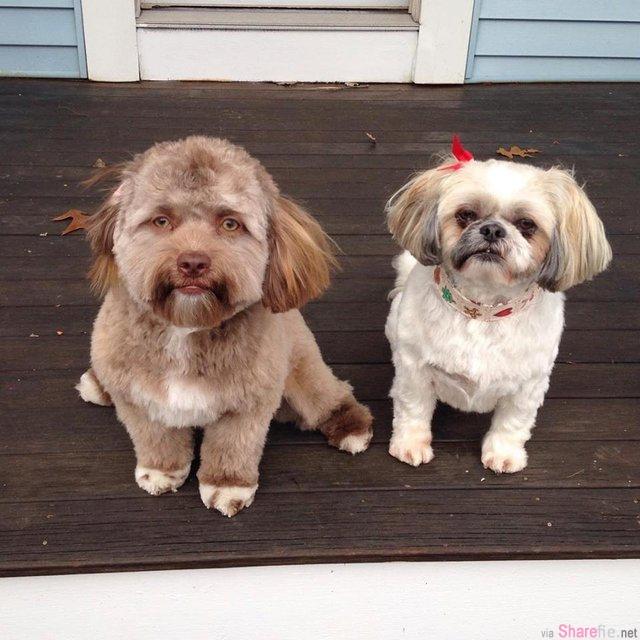这只狗狗有「人脸」,眼睛嘴唇很像人
