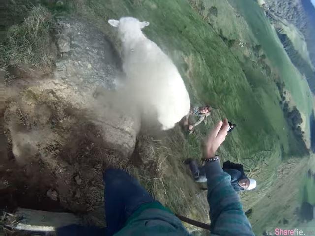 男子解救卡住篱笆的小绵羊,谁知道手一滑...