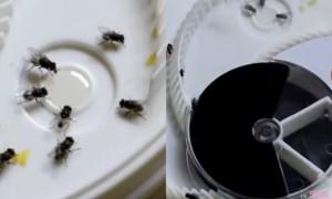 史上最佛心捕蝇器,用这机关让苍蝇乖乖被捆住