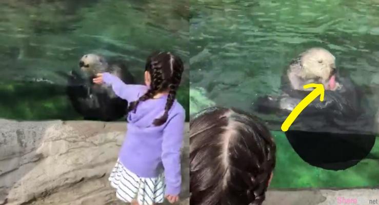 小女孩发现海獭吃着「红红的东西」问爸爸那是什么,爸爸超尴尬回答那是...